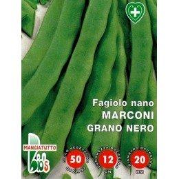 judía marconi grano negro (Coco Noir Starazogorski) - semillas ecologicas
