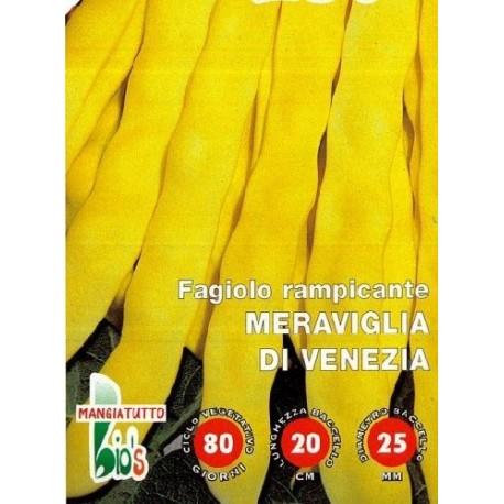 judia amarilla maravilla de Venecia (semillas ecológicas)