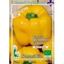 pimiento amarillo cuadrado(semillas ecológicas)