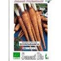 scorzobianca (semillas ecológicas)