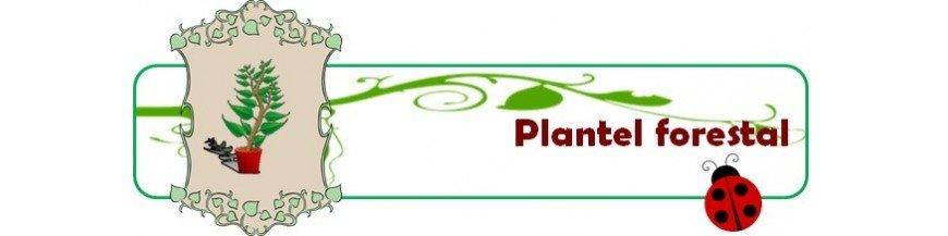 Plantón forestal