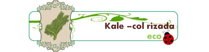 kale - col rizada