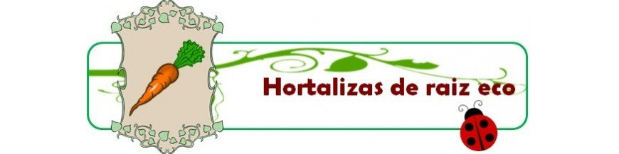 hortalizas de raiz eco