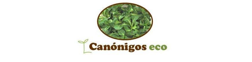 canónigos - valeriana