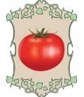 plantel de tomates