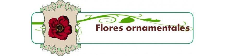 flores ornamentales