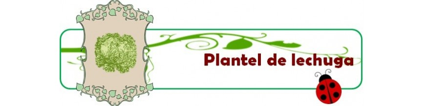 plantel de lechugas