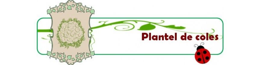 plantel de coles