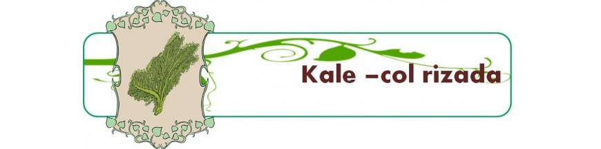 kale -col rizada