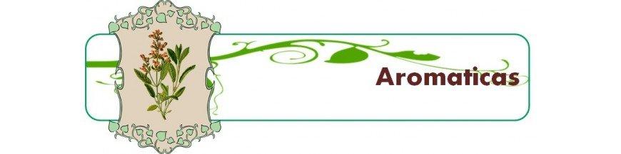 hierbas aromáticas en maceta