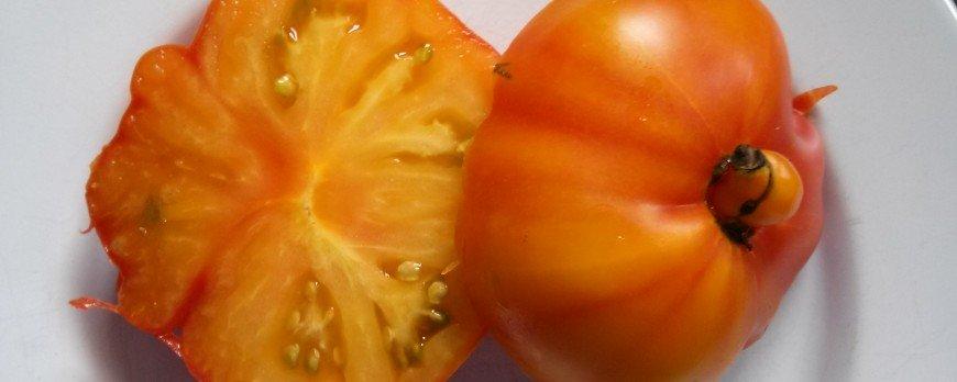 como obtener semillas de tomate