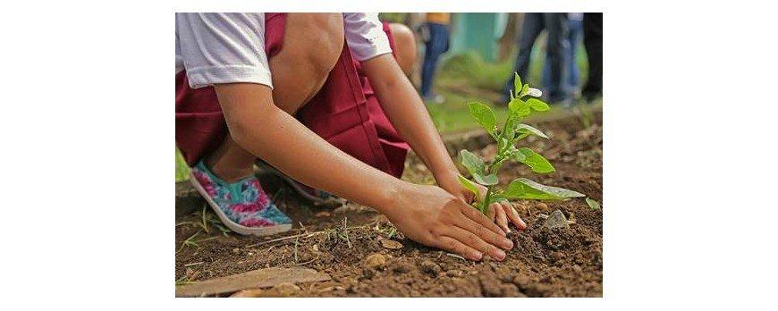 como plantar un bosque